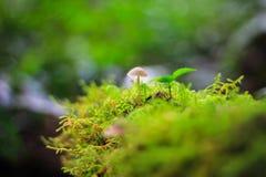 Moos Hintergrund und smallmushroom Stockfotografie