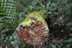 Moos im Dschungel stockbild