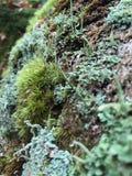 Moos im Wald stockfoto