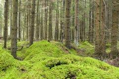 Moos im Wald. Lizenzfreies Stockbild