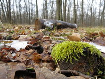 Moos im Wald Stockfotografie