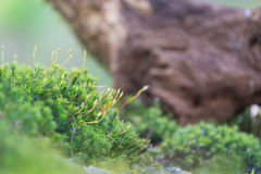 Moos im Wald stockfotos