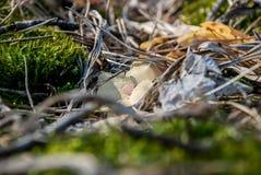 Moos im Wald Lizenzfreie Stockfotos