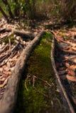 Moos im Wald mit Sonnenlicht lizenzfreie stockfotografie