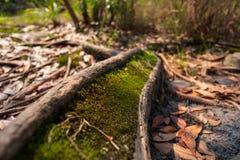 Moos im Wald mit Sonnenlicht stockbild