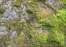 Moos op de kalkspaatrots Stock Fotografie