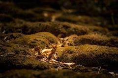Moos trocknet auf der Felsenbahn zum Berg und schönen zum Sonnenlichthintergrund Stockbilder