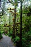 Moos umfasst Baumaste auf der wilden pazifischen Spur, Ucluelet, Britisch-Columbia, Kanada stockfotos