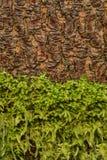 Moos- und Baumrindebeschaffenheit Stockbilder