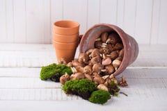 Moos- und Birnenblumen Lizenzfreies Stockfoto