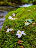 Moos und Blumen lizenzfreies stockfoto
