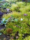 Moos und Blumen im Wald Stockbilder