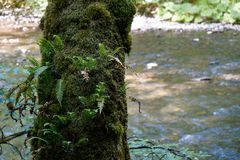 Moos und Farn, die auf Baum vor Fluss wachsen lizenzfreies stockbild