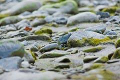 Moos und Felsen nah an einem Fluss in Italien mit Blättern und branche Stockfotografie