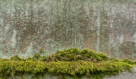 Moos und Flechte auf einem Stein Stockfotografie