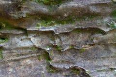 Moos und Flechte, die auf dem Felsen wachsen stockbilder