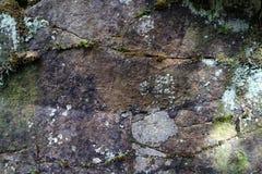 Moos und Flechte, die auf dem Felsen wachsen lizenzfreie stockfotos