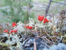 Moos und kleine Pilze Stockfotos