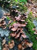 Moos- und Pilzmakro im Waldhintergrund lizenzfreie stockfotos