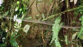 Moos und Spinnennetze auf einem Baum stock video footage