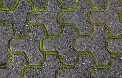 Moos- und Steinhintergrund Stockbild