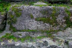 Moos- und Steinhintergrund Beschaffenheit der Backsteinmauer Der alte Felsen im Holz - gewachsen Stockbilder