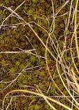 Moos und trockenes Gras Lizenzfreies Stockbild
