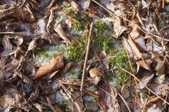 Moos unter Blättern Stockbild