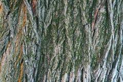 Moos wächst ein Stückchen auf der Barke Lizenzfreie Stockfotografie