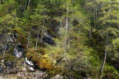 Moosbedeckter Gebirgswald auf den Felsen mit einem Regenbogen lizenzfreie stockbilder