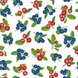 Moosbeer- und Blaubeernahtloser Hintergrund. Reife rote Moosbeeren mit Blättern. Vektorillustration. Lizenzfreie Stockfotos