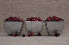 Moosbeeren in drei füßigen Schüsseln mit losen Beeren Stockbilder