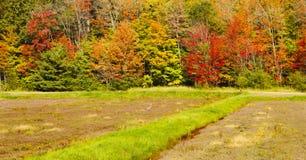 Moosbeerernten Moosbeerfeld in Johnston-` s Moosbeere Marsh Farm, Kanada Stockfotos