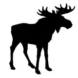 Moose royalty free illustration