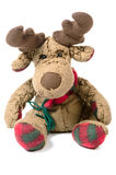 Cuddly toy. Moose as cuddly toy before white background Royalty Free Stock Photography