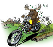 Moose-biker. Angry Moose on motorcycle off-road Stock Photo