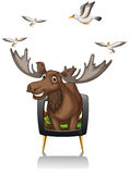 Moose and birds on television screen Royalty Free Stock Photo