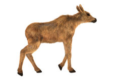 Moose Calf. 3D digital render of a cute moose calf isolated on white background Stock Photography
