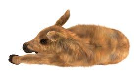 Moose Calf Royalty Free Stock Photos