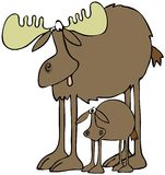Moose and calf. This illustration depicts a large bull moose with its calf standing beneath it Royalty Free Stock Photos