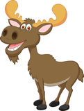 Moose cartoon Stock Photography