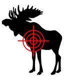 Moose crosshair Stock Photos