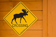 Moose Crossing Stock Photos