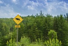 Moose Crossing Sign Royalty Free Stock Image