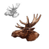 Moose elk muzzle profile vector isolated sketch. Moose elk head sketch vector icon. Wild forest stag deer or reindeer with antlers. Isolated wildlife fauna and stock illustration