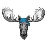 Moose, elk Wild animal wearing bandana or kerchief or bandanna Image for Pirate Seaman Sailor Biker Motorcycle Stock Photography