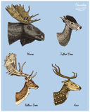 Moose or eurasian elk, tufted deer, roe or doe, axis vector hand drawn illustration, engraved wild animals with antlers Stock Photo