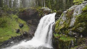 Moose falls in Yellowstone National Park. stock video