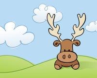 Moose in a Field Stock Photo
