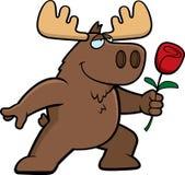Moose Flower Royalty Free Stock Photo